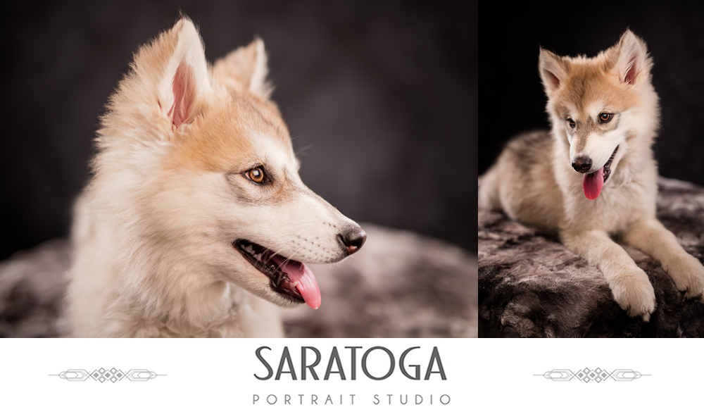 SPS_-_03_-_Dutchess_-_Dog_Portrait