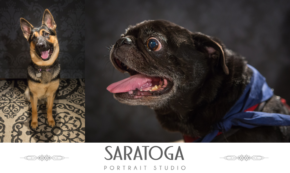 SPS_-_09_-_Impressions_12th_Annual_Dog_Day_-_Portraits