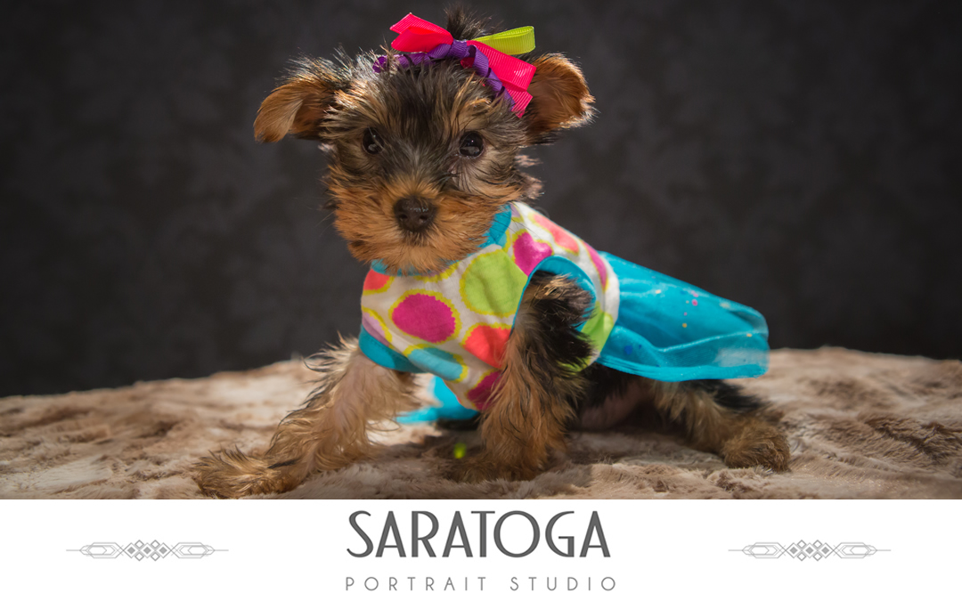Impressions of Saratoga 12th Annual Dog Day Portraits