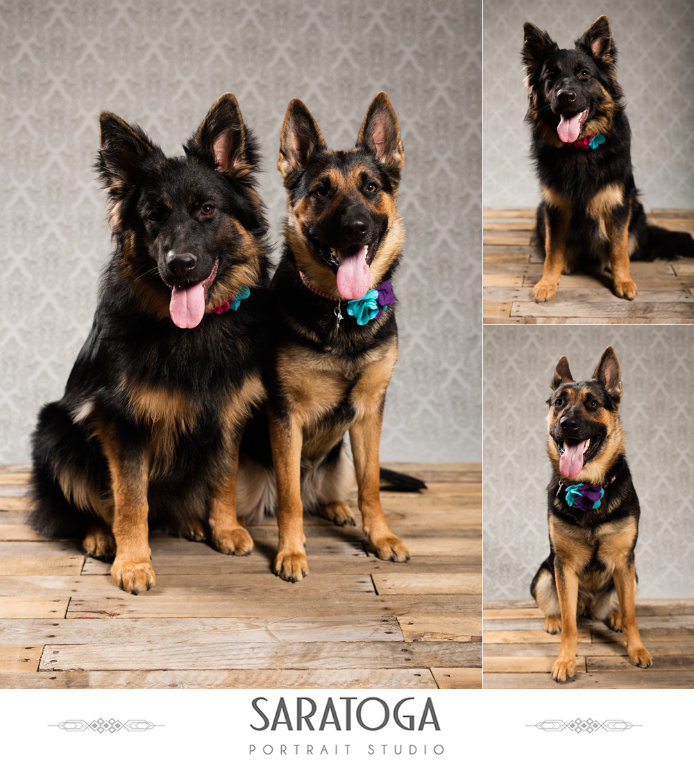 SPS_-_01_-_Impressions_of_Saratoga_-_Dog_Day_2017