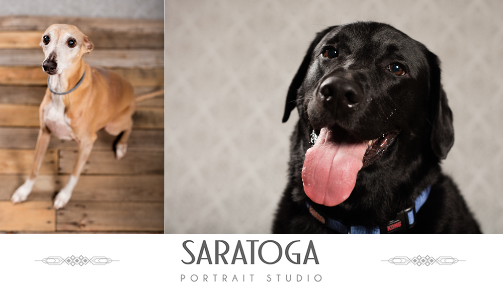 SPS_-_02_-_Impressions_of_Saratoga_-_Dog_Day_2017