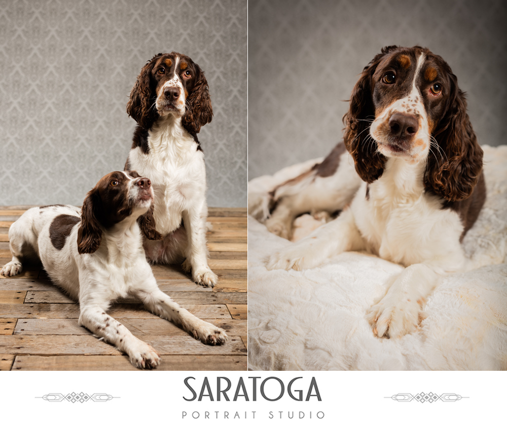 SPS_-_03_-_Impressions_of_Saratoga_-_Dog_Day_2017