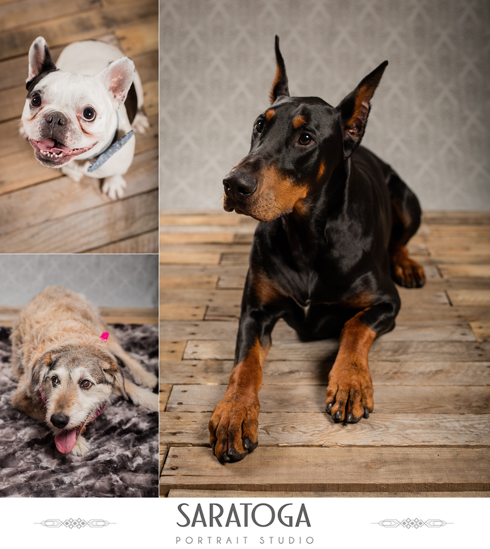 SPS_-_04_-_Impressions_of_Saratoga_-_Dog_Day_2017