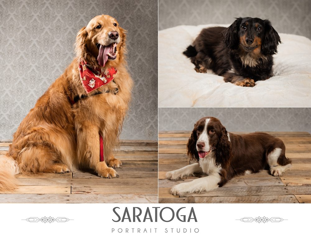SPS_-_05_-_Impressions_of_Saratoga_-_Dog_Day_2017