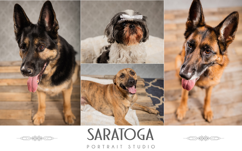 SPS_-_06_-_Impressions_of_Saratoga_-_Dog_Day_2017