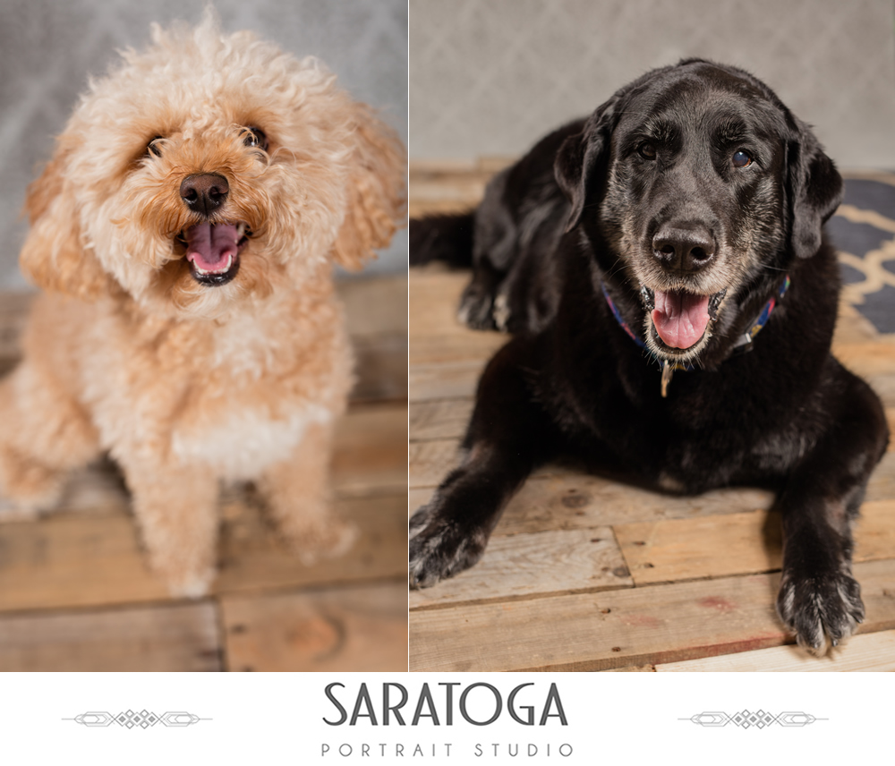 SPS_-_07_-_Impressions_of_Saratoga_-_Dog_Day_2017