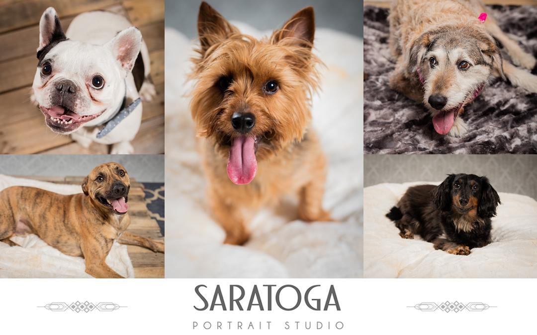 Impressions of Saratoga 13th Annual Dog Day Portraits
